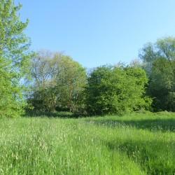 Etude paysagère Fleron parc des grimonprés