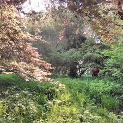 Inventaire parc des grimonprés Fléron