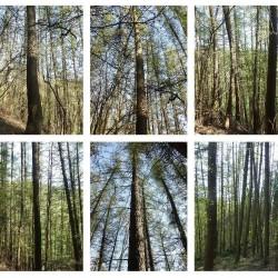 Estimation forestière TER-Consult
