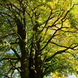 Bel arbre - TER-Consult